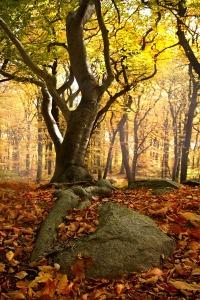 beech-forest-2912890_1920
