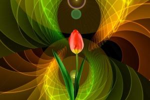 tulip-2308942_1920