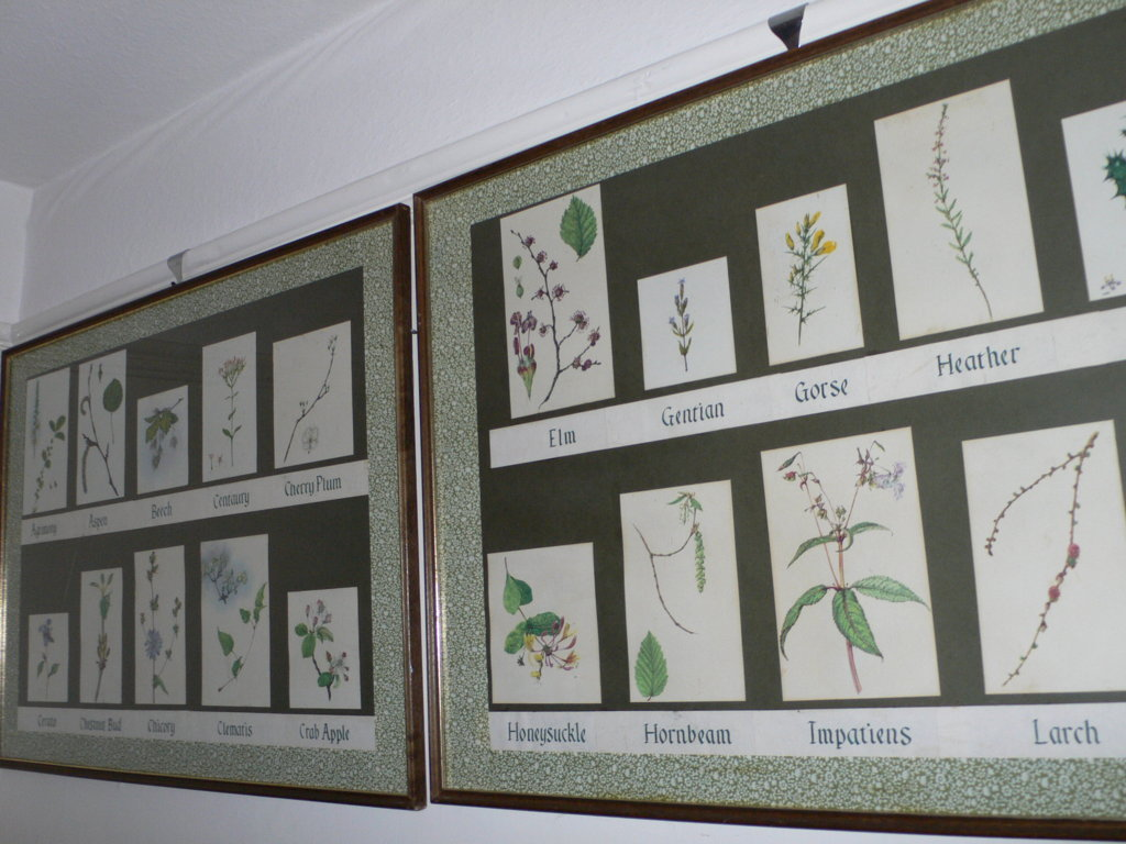 acquerelli Nora Weeks the bachflowers.com